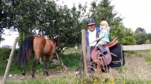 caballos (12)