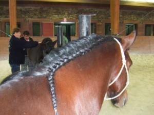 caballos (13)