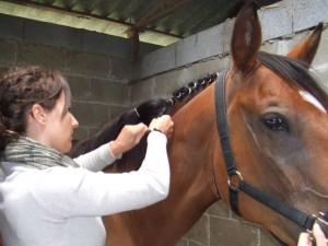 caballos (14)