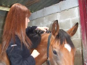 caballos (15)