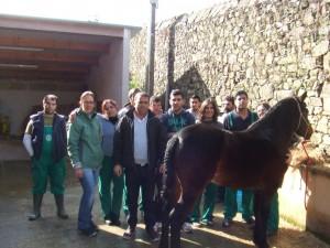 caballos (16)