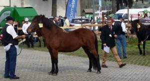 caballos (3)