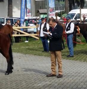 caballos (4)